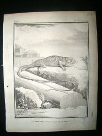 Buffon: C1770 Marbled Lizard, Antique Print